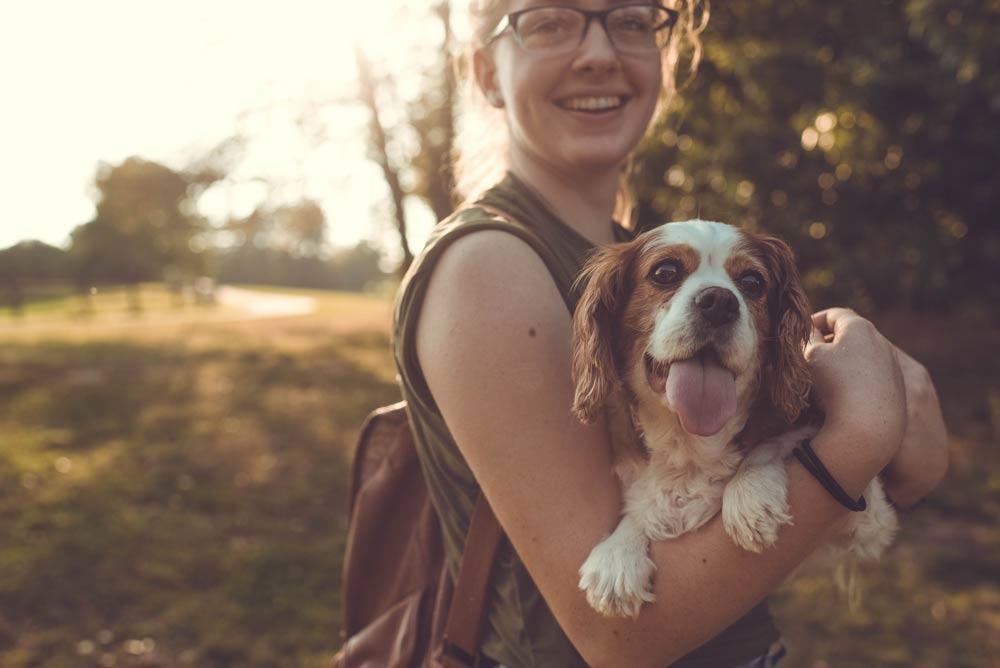 Garderie pour chiens