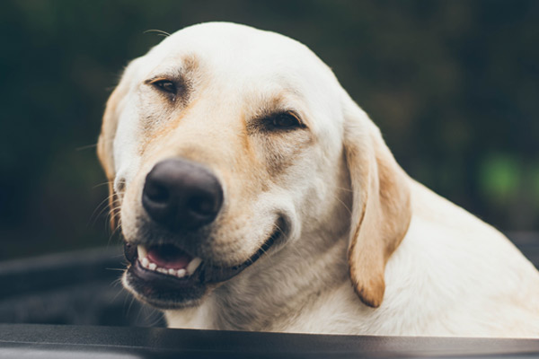 Dressage de chien